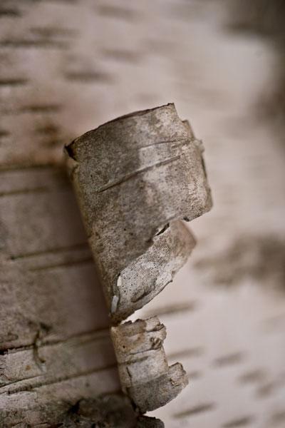 Bark Peel II