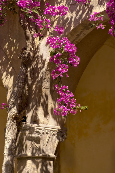 Abbey Flowers I