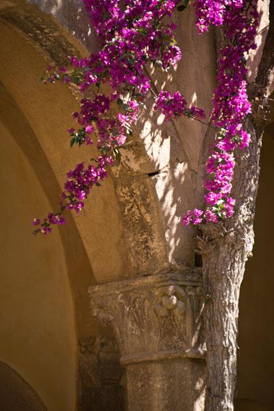 Abbey Flowers II