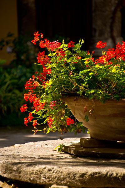 Abbey Flowers IV