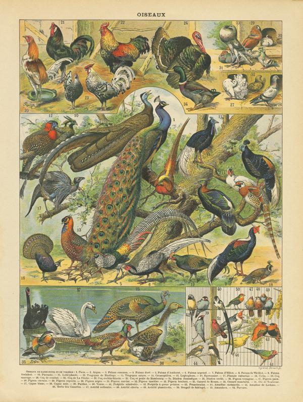 Oiseaux I