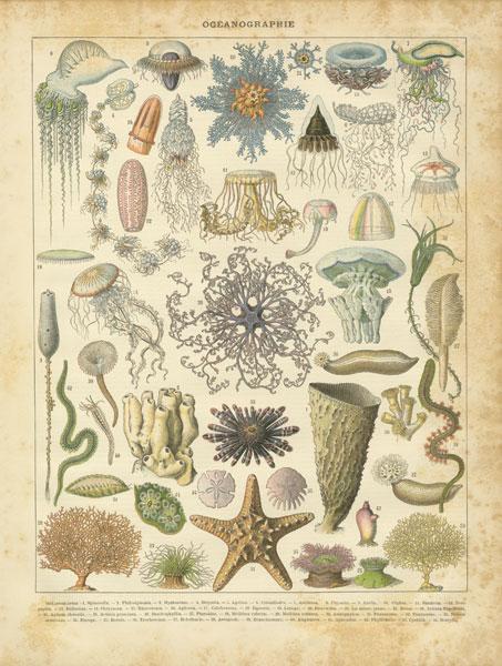 Oceanographie