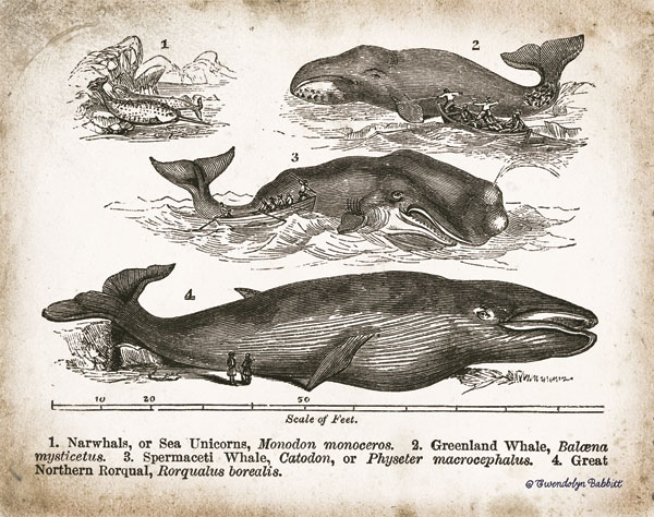 Antique Whales II