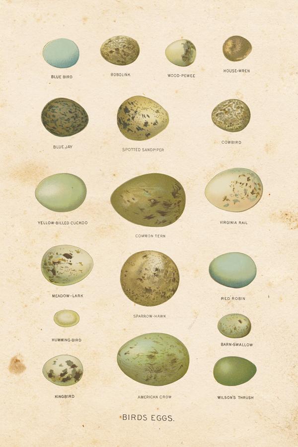 Birds Eggs I