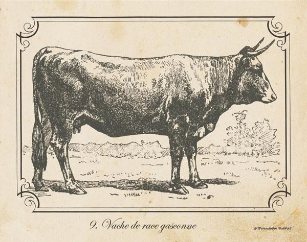 Farm Bull I