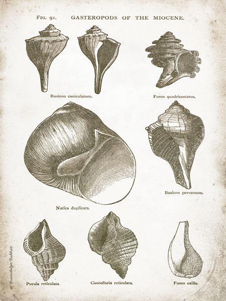 Vintage Shells II