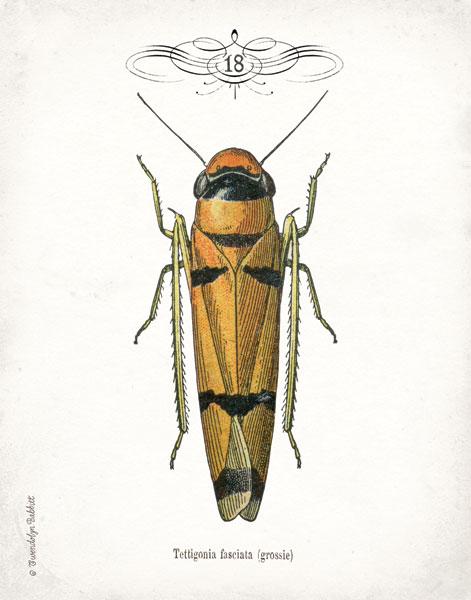Beetle II