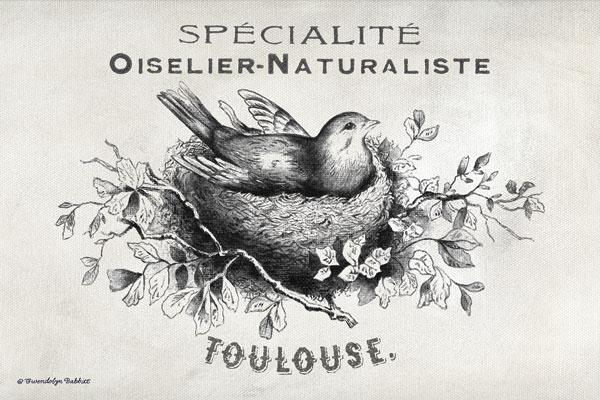 French Bird Nest I
