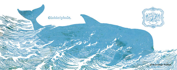 Whale on White I