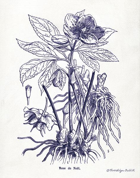 Indigo Botanical II