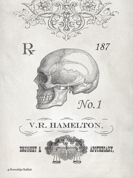 Elegant Skeleton Skull