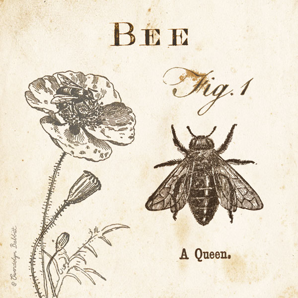Bee Fig 1