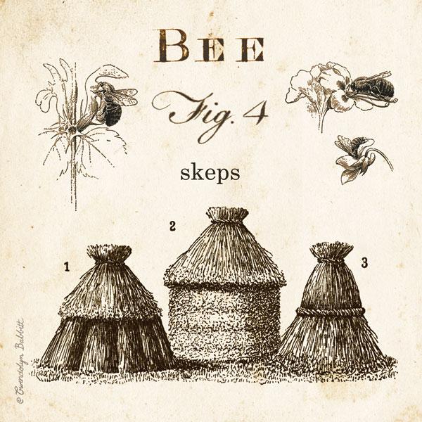 Bee Fig 4