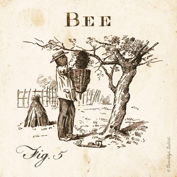 Bee Fig 5