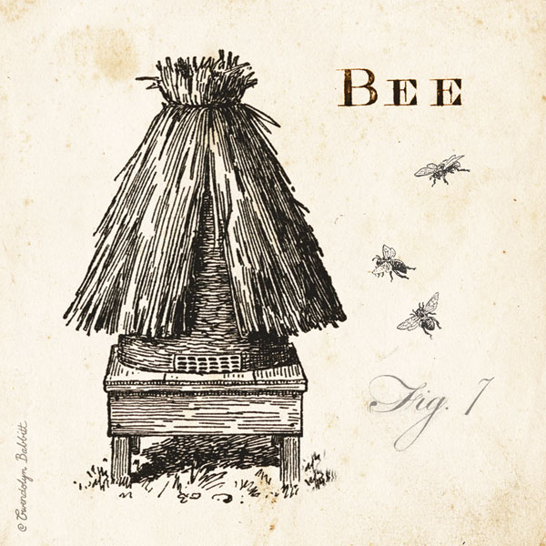 Bee Hive Fig 7
