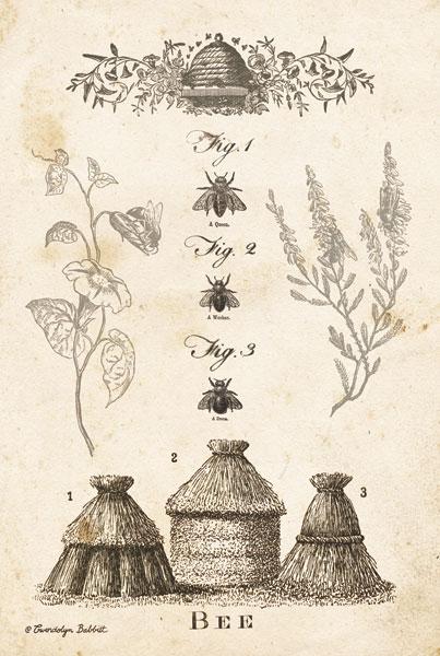 Bee Chart II
