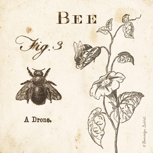 Bee Fig 3