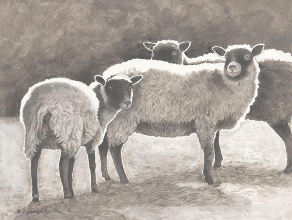 Three Heirloom Sheep