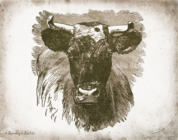 Cow Face I
