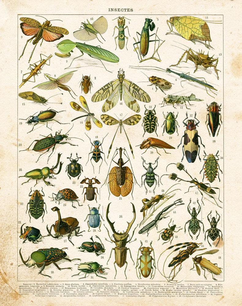 Bug Chart I