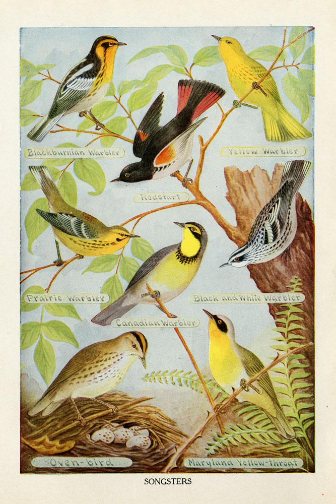 Bird Chart III