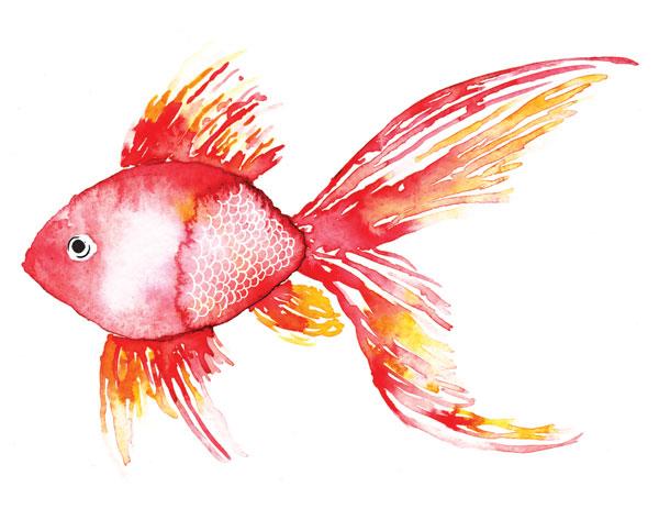 Deep Sea Coral Fish
