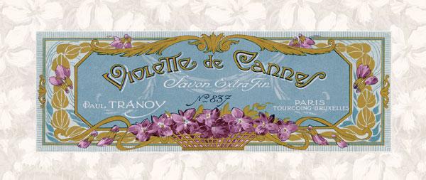 Violette de Cannes