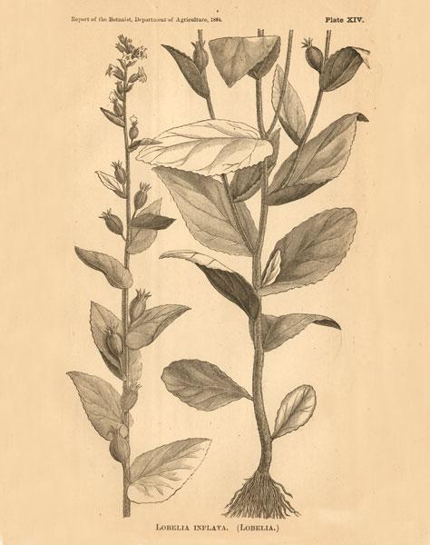 Vintage Botanical VI