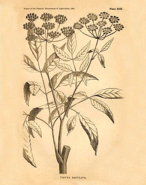 Vintage Botanical VII
