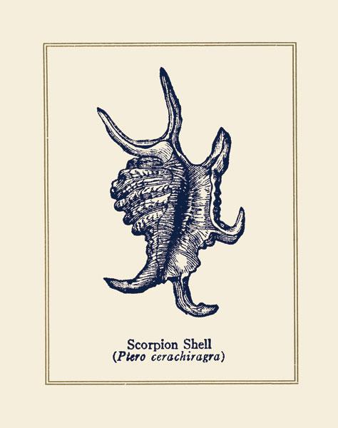 Scorpion Shell