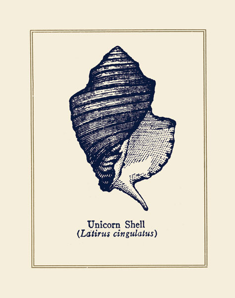 Unicorn Shell