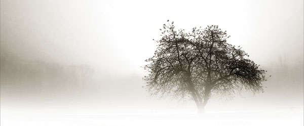 In the Mist I