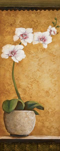 Hanna's Orchids I