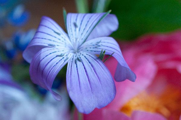 Delicate Flower 1