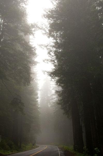 Redwood Highway 2