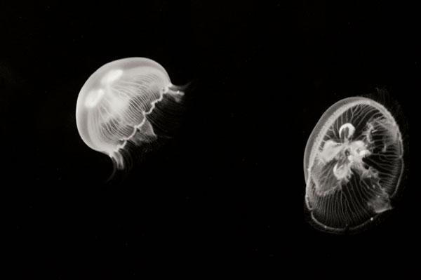Jellyfish Glow I