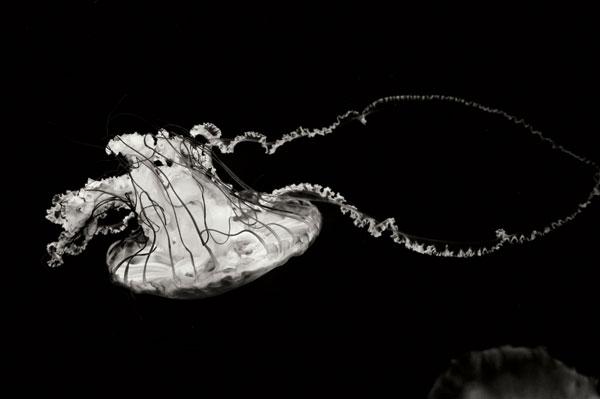 Jellyfish Glow V
