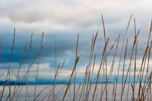 Whidbey Grass II