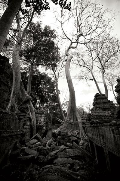 Ancient Ta Prohm I