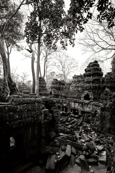 Ancient Ta Prohm IV
