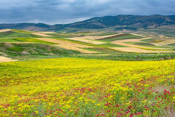 Morocco Wildflowers