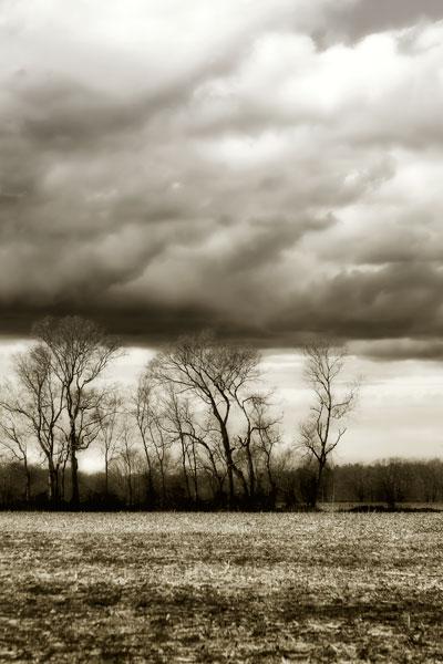 Winter Fields VI