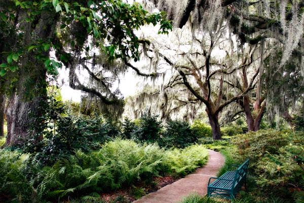 Sultry Garden II