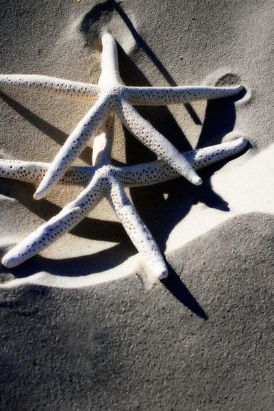 Sea Stars I
