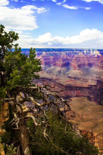 The Canyon Rim II