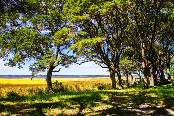 Cape Fear Overlook