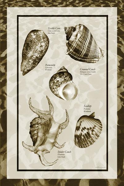 Sand & Shells I