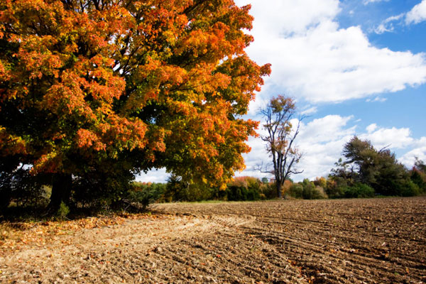 Autumn Scene II