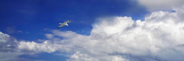 Gull Above the Sea II