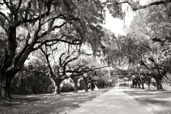 Charleston Oaks 10